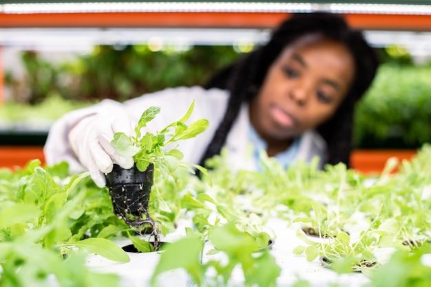 緑の苗が付いている小さな鍋を棚に戻す温室の手袋をはめたアフリカの女性労働者の手