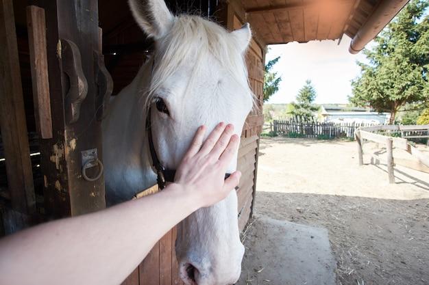 Рука человека касаясь белой конюшне