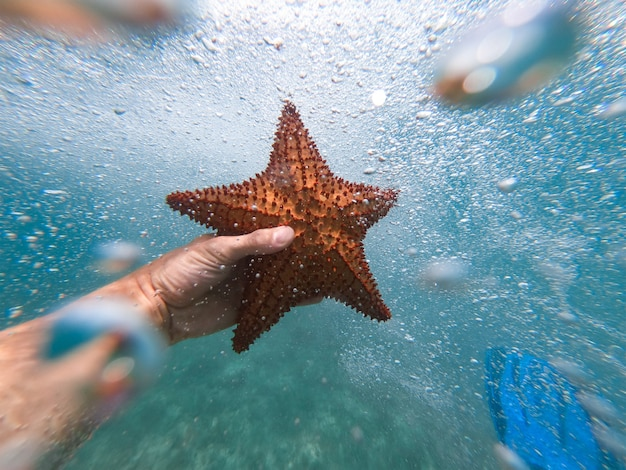 ヒトデを水中で保持しているシュノーケラーの手