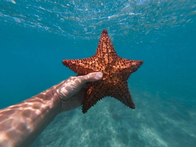 Рука сноркелера, держащего морскую звезду под водой