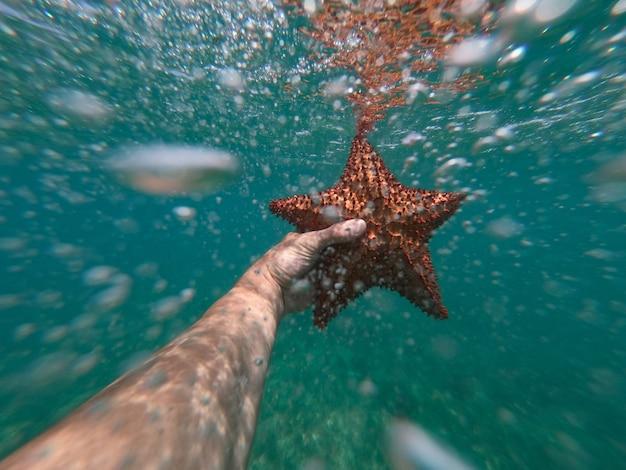 Рука сноркелера держит морскую звезду под водой с пузырьками на переднем плане
