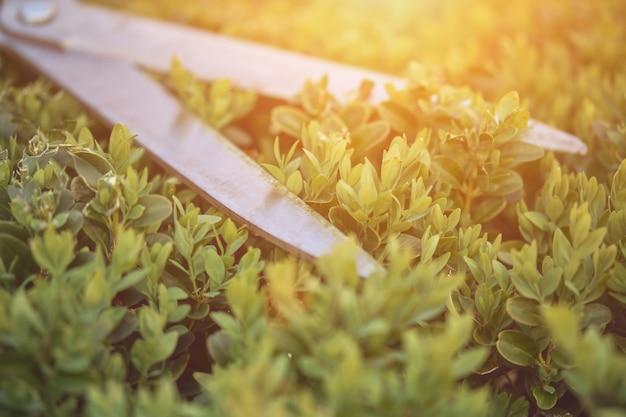 Рука неузнаваемого садовода в красочной перчатке подрезает зеленую юкку или небольшую пальму с обрезкой