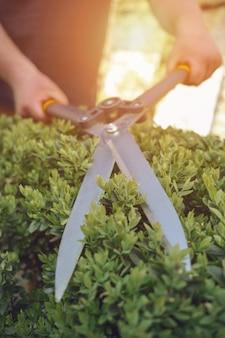 カラフルな手袋をはめた認識できない栽培者の手は、緑のユッカまたは小さなヤシの木を剪定で切り取っています