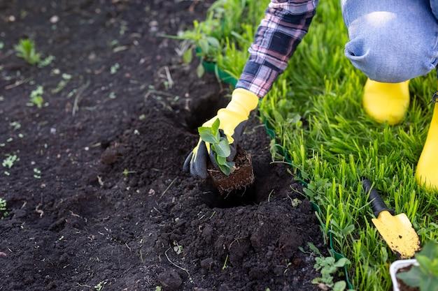 Рука садовника в перчатках держит в руках саженец маленькой яблони, готовит растение