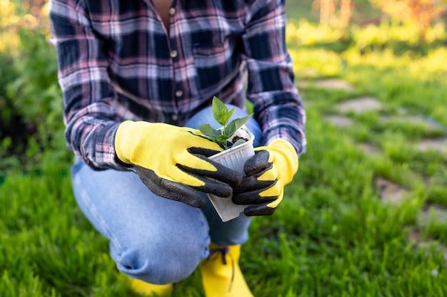 手袋をはめた女性の庭師の手は、地面に植える準備をしている彼女の手に小さなリンゴの木の苗を持っています。植樹コンセプト