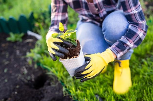장갑에 여자 정원사의 손은 작은 사과 나무의 모종을 보유