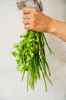 Hand of a person holding fresh parsley