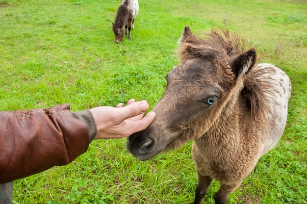 Hand petting a cute pony.