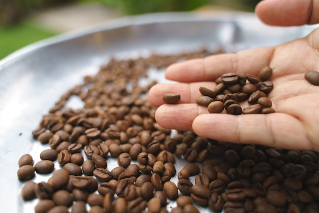 Hand picking bad roasted coffee