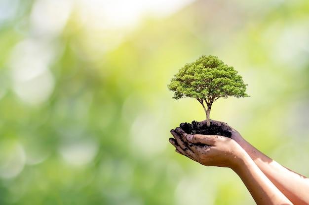 자연 녹색 배경을 가진 손으로 심은 나무. 식물 성장과 환경 보호의 개념