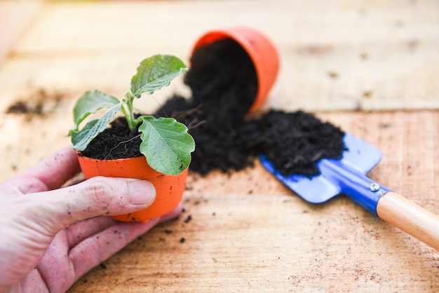 Hand planting flowers in pot with soil on wooden background - works of gardening tools small plant at back yard