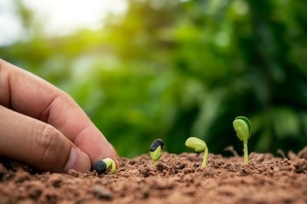 発芽、植物の成長、植え付けの概念の順に、地面に植物を手植えし、土壌に木を植えます。