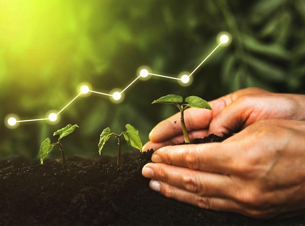 Шаг посадки рассады в саду с цифровой диаграммой роста