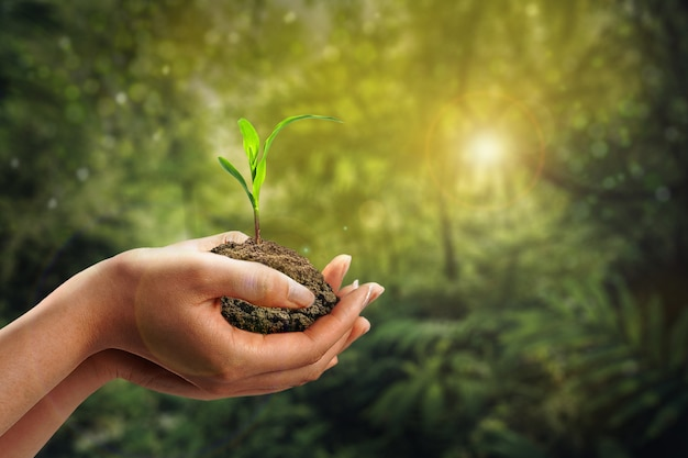 Hand planting sprout in soil with sunset and grass garden background