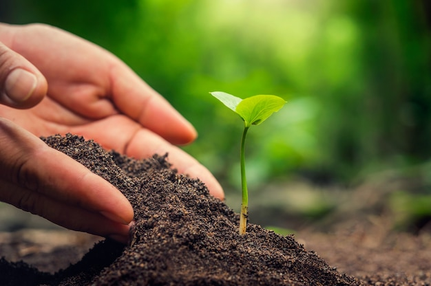Hand planting sprout in soil with sunset