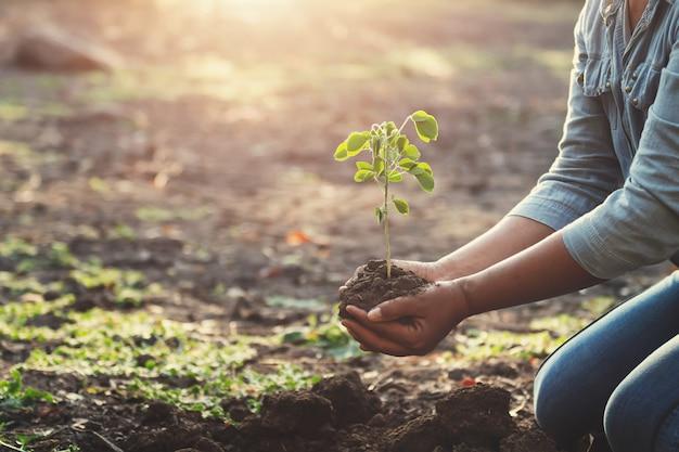 朝の光で若い木を植える手。エココンセプト