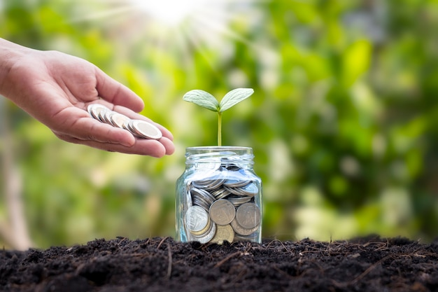 Hand pouring coins in a glass jar with coins and a plant on soil and blurred background