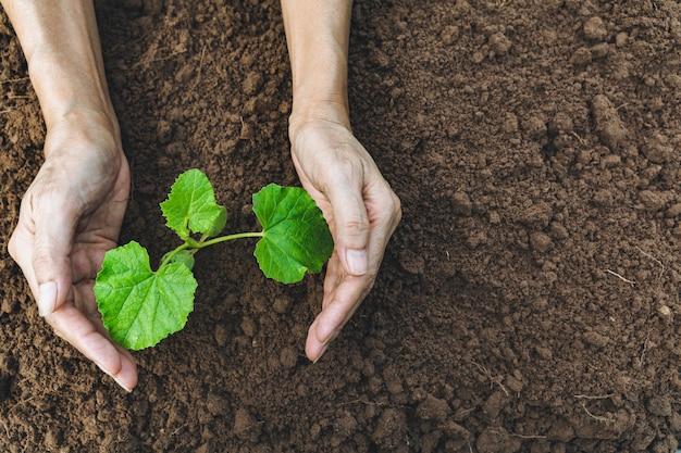 土で育つ緑の若い植物を保護する手