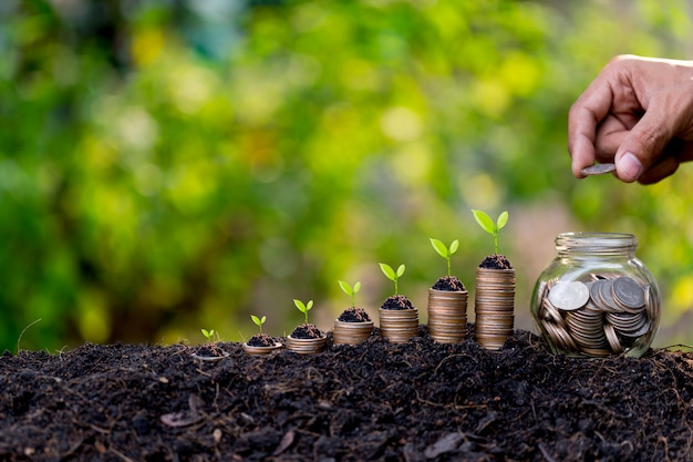 Hand putting money coins like growing graph,plant sprouting from the ground with green  background.