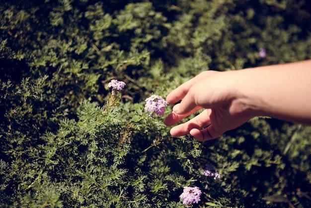 보라색 꽃에 손을 뻗어