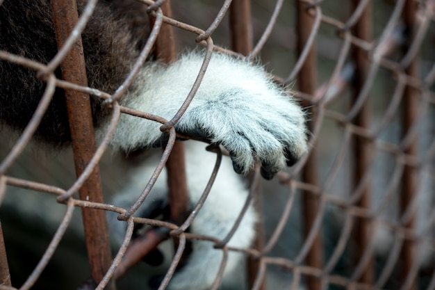 A hand of sad animals locked in a zoo