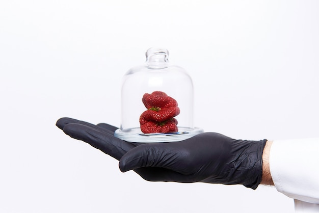 Hand of scientist with strawberries of strange unusual shape under glass cap