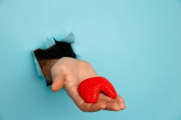 파란색 종이 벽에 찢어진 구멍에서 갑상선을 보여주는 손. 건강 관리, 조제 학 및 의학 광고.