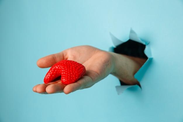 파란색 종이 벽에 찢어진 구멍에서 갑상선을 보여주는 손. 건강 관리, 조제 학 및 의학 개념.