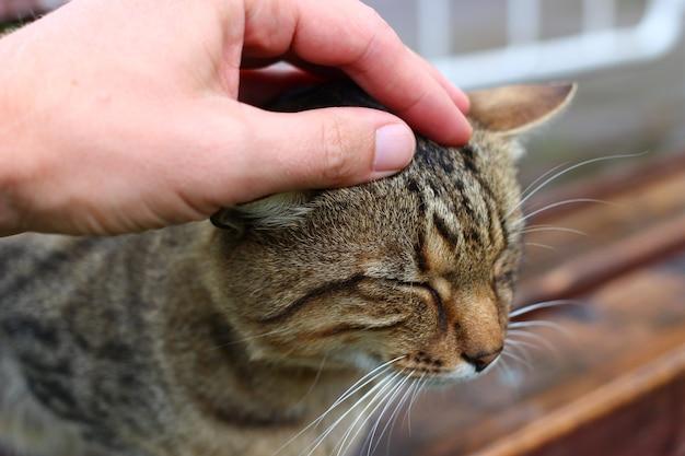 회색 고양이 클로즈업을 쓰 다듬어 손