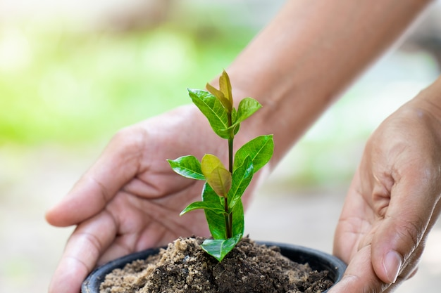 Hand taking care to little trees that growing help the environment better and much more fresh air.