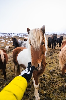 Hand touching a shetland pony surrounded by horses and greenery with a blurry background