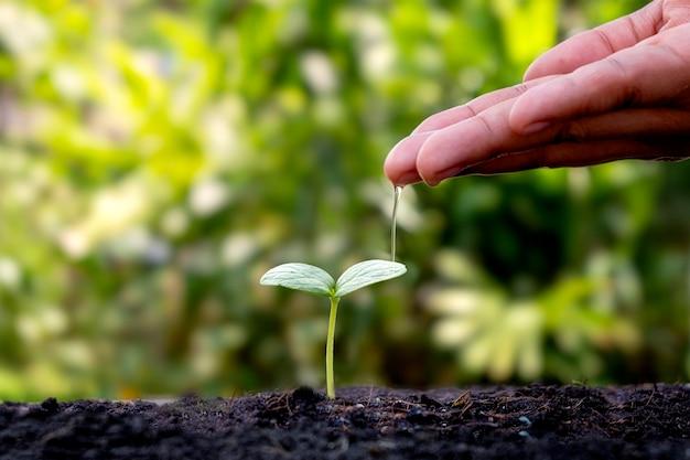 흐린 식물 배경으로 토양에 성장 식물을 급수하는 손