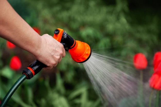 Hand watering plants from the hose