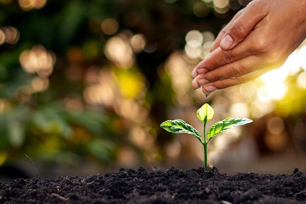 Ручной полив растений, которые растут на качественной почве на природе, уход за растениями и идеи выращивания деревьев.