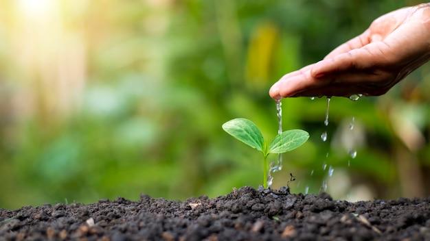 자연의 양질의 토양에서 자라는 손으로 물을주는 식물, 식물 관리 및 나무 재배 아이디어.