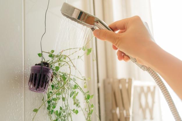 화장실에 샤워 시설을 물을 작은 식물을 손.
