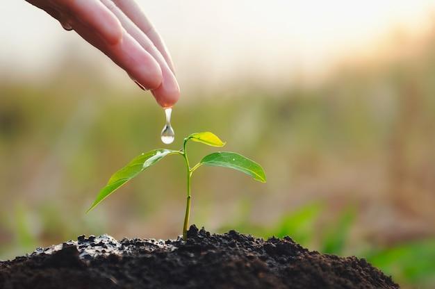 庭の若い植物に水をまく手。エコアースデイコンセプト