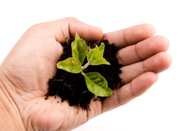 Рука с зеленым ростком