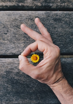 Hand with beautiful flowers in the summer