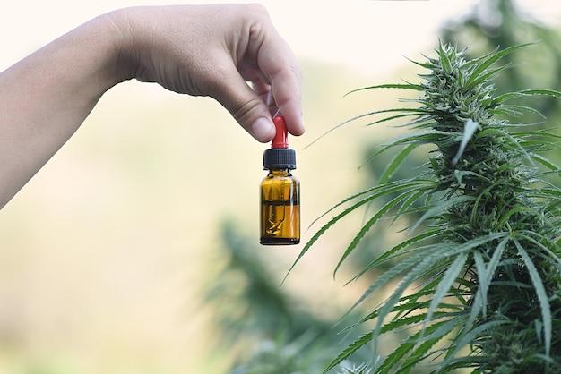 Рука с бутылкой экстракта cbd в свободном крыле свежих плантаций.