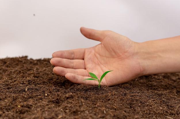 Рука с саженцами зеленых растений на черной плодородной почве