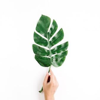 孤立した熱帯のヤシの葉を持つ手