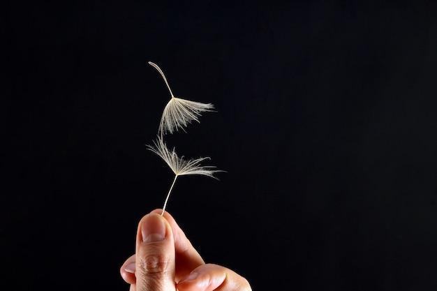 어두운 배경에 민들레의 두 개의 비행 씨앗으로 손 프리미엄 사진