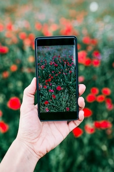 Hand of a young woman taking a picture of a field with poppy flowers