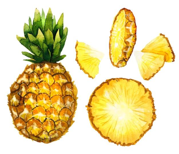 白で隔離の手描きの水彩画の熟したパイナップルまたはアナナ