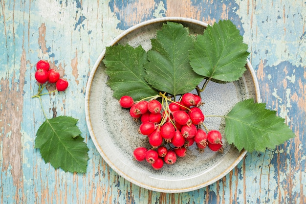 A handful of hawthorn berries with leaves on a plate on a rustic  top view