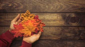 Handful of bright autumn maple leaves