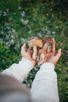 荒野の屋外で健康的なキノコ、レーズン、乾燥キノコを一握り。