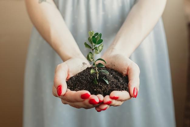 어린 식물이 자라는 소수의 토양