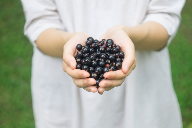 A handful of ripe forest blackcurrant (blackberry) in the hands